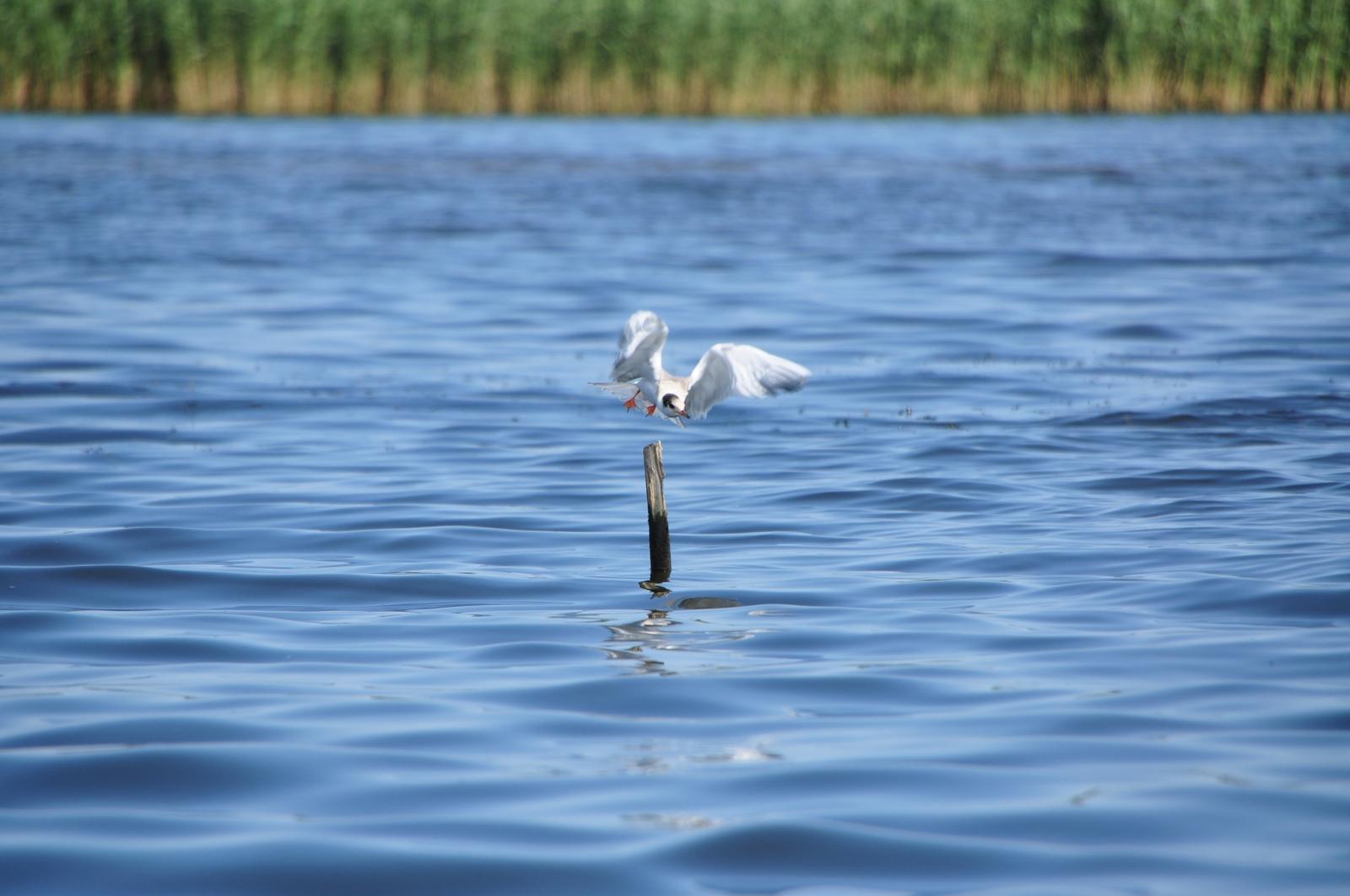 baltic_sea_seagull