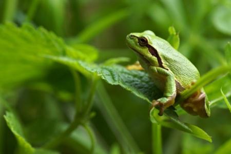 parsteinsee_frog