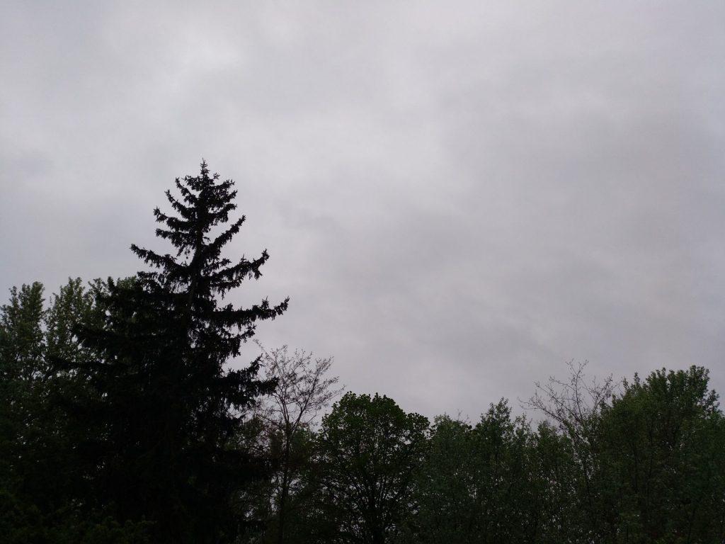 Erster Regen 2019