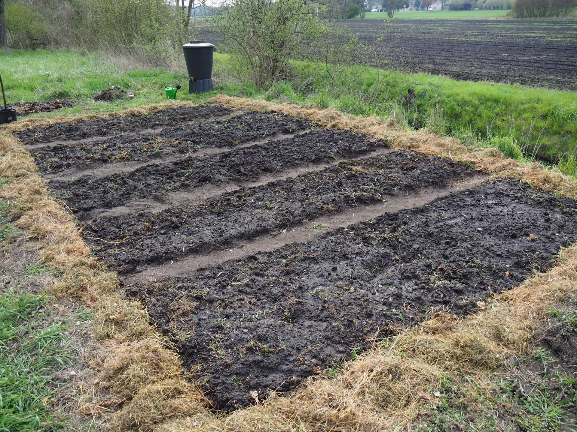 Umgegraben, eingesät und bewässert.